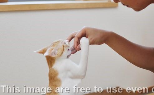 Cara Menyuapi Kucing