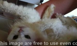 Penyebab Kucing Tidak Mau Makan