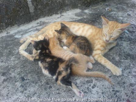 susu untuk bayi kucing