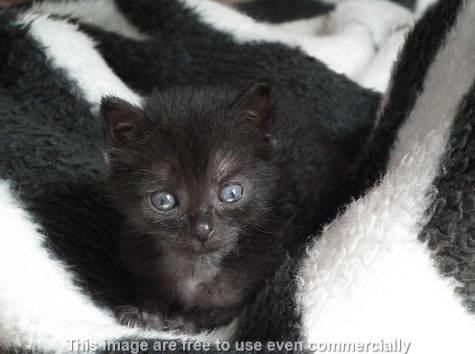 kotoran mata anak kucing
