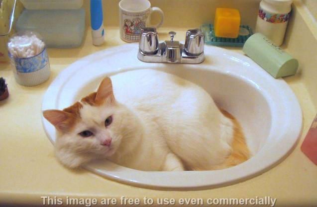 memandikan kucing bulu rontok