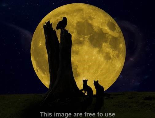 Kenapa Kucing Mengeong Pada Tengah Malam