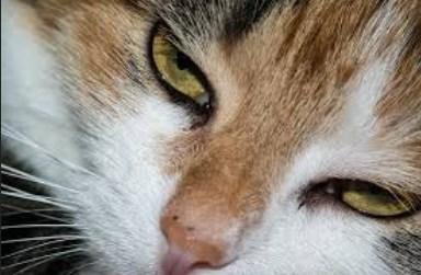C:\Users\T450\Desktop\Cara Merawat Kucing Sakit Mata.jpg