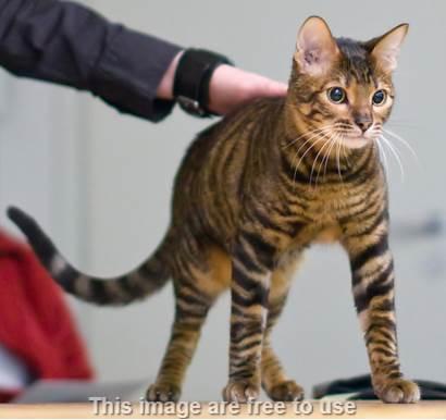 Melatih Kucing Peliharaan Agar Pintar dan Nurut