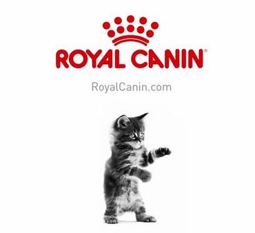 Cara Membuat Kucing Persia Gemuk