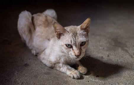 Penyebab Kucing Semakin Kurus
