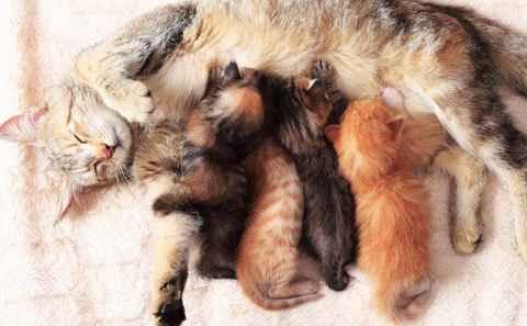 Umur Berapa Kucing Bisa Hamil Tips Kucing
