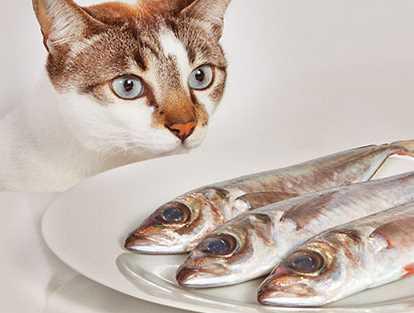 Bolehkah Kucing Makan Nasi Atau Roti Tips Kucing