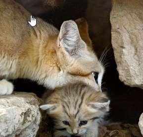 Kenapa Kucing Memindahkan Anaknya