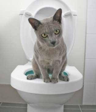 Kucing Buang Air Berapa Kali Sehari