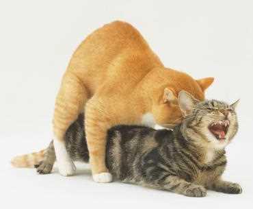Penyebab Kucing Tidak Mau Kawin