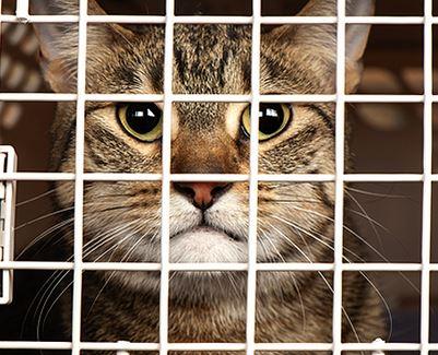 Bolehkah Mengurung Kucing Dalam Kandang
