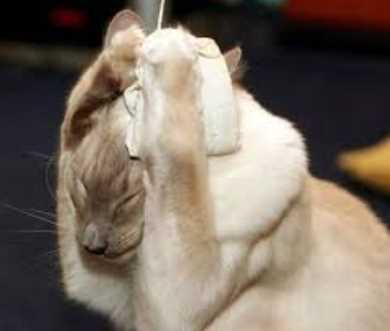 Cara Menenangkan Kucing Stress