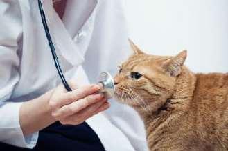 Ciri Ciri Kucing Sakit Demam