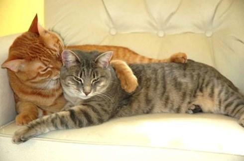 Kenapa Kucing Betina Tidak Mau Kawin