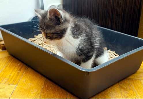 Tanda Kucing Ingin Buang Air