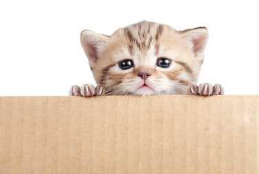 Umur Berapa Anak Kucing Ditinggal Induknya