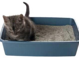 Cara Membersihkan Kandang Kucing Persia