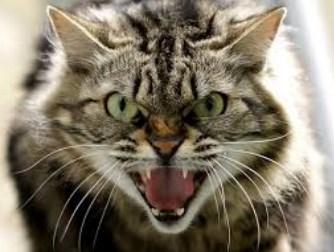 Penyebab Kucing Menjadi Galak