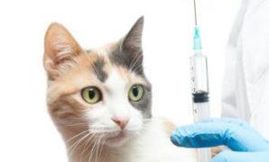 vaksin apa saja untuk kucing