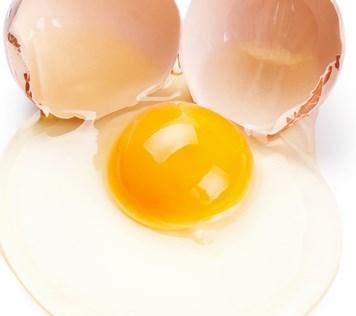 apa-manfaat-kuning-telur-untuk-kucing