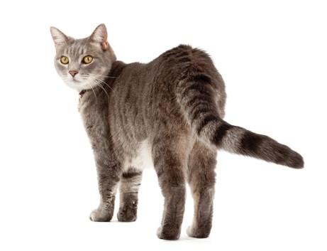 Cara Melatih Kucing Agar Mau Dipanggil