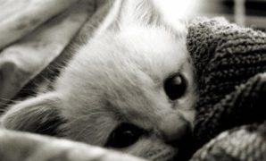 Ciri ciri anak kucing yang sedang sakit