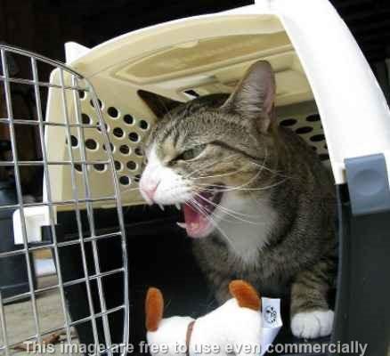 kenapa-kucing-tidak-mau-dikandangkan