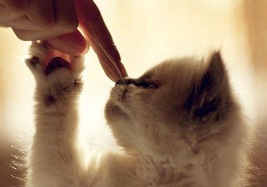 kucing-nabi
