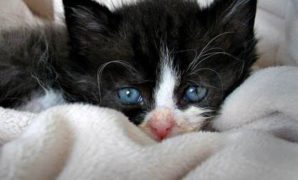 Apa Penyebab Mata Kucing Belekan