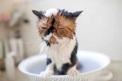 Bolehkah Anak Kucing Dimandikan