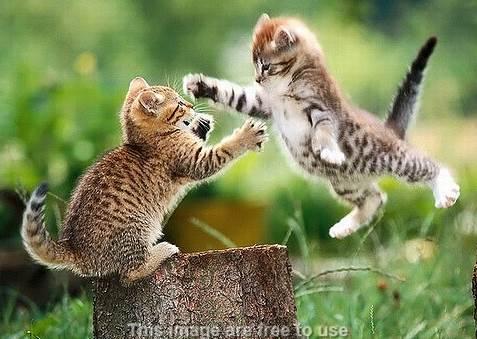 Supaya Kucing Tidak Berkelahi Dan Akur