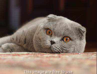 Tanda Kucing akan Melahirkan