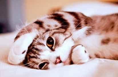 Bagaimana Supaya Kucing Menjadi Manja