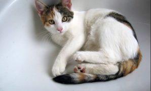 Cara Memandikan Kucing Kampung