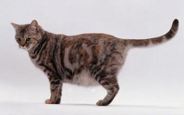Umur Berapa Kucing Bisa Hamil