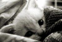 Cacing Gelang Pada Kucing