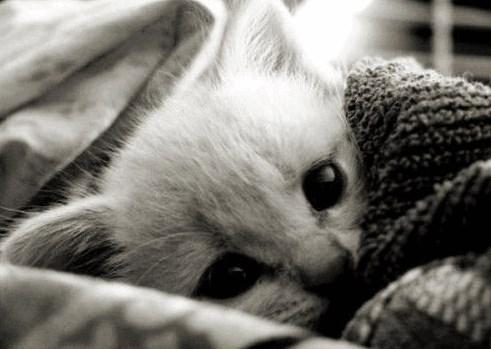 Ciri Ciri Anak Kucing Yang Sedang Sakit Tips Kucing