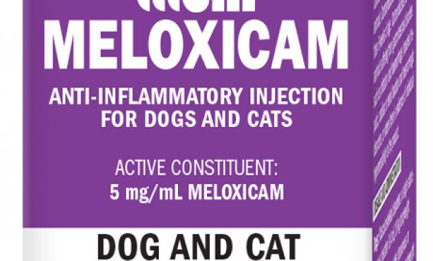 Obat Demam Meloxicam untuk Kucing