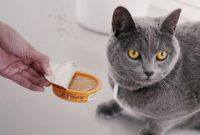 Penyebab Kenapa Kucing Tidak Mau Makan