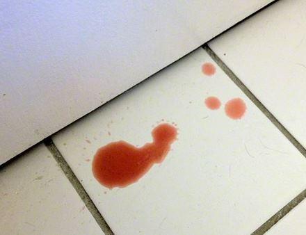 Penyebab Kucing Muntah Darah