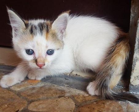 Anak Kucing Mix Dome