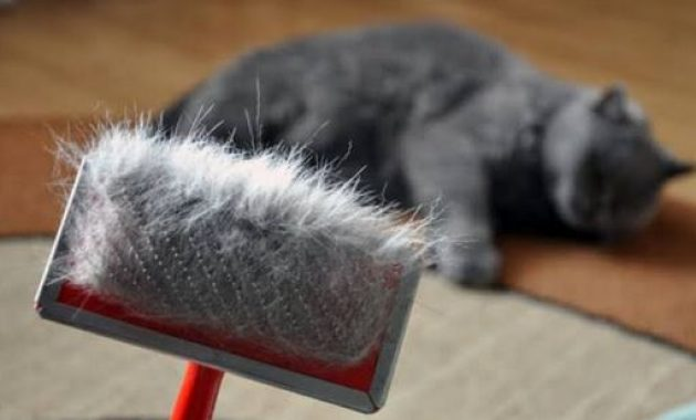 Bahaya-Bulu-Kucing