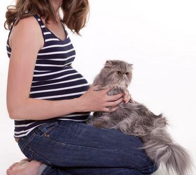 Bahaya Bulu Kucing Bagi Ibu Hamil