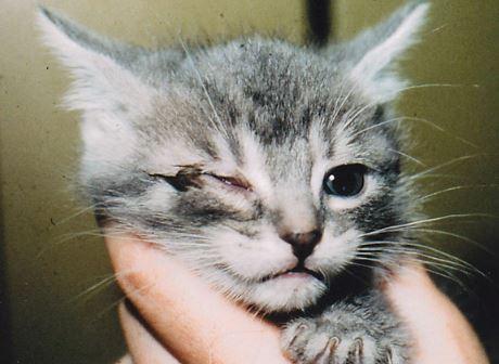 Cara Merawat Kucing Sakit Mata