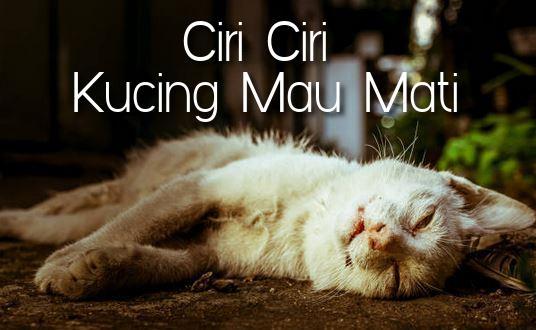 Ciri Ciri Kucing Mau Mati
