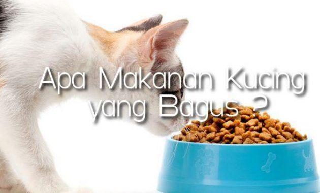 Makanan-Kucing-yang-Bagus