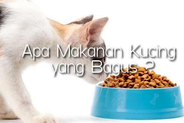 Makanan Kucing yang Bagus
