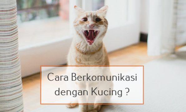 Bagaimana Cara Berkomunikasi dengan Kucing