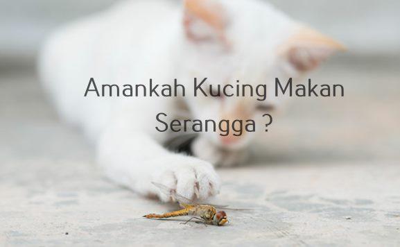 Amankah Kucing Makan Serangga